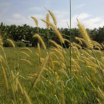 A summer walk through the farm.